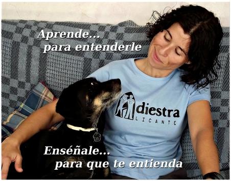 Adiestramiento canino con enfoque científico (cognitivo-emocional) a domicilio en la provincia de Alicante (San Vicente, San Juan, Campello, Elche, Elda…).