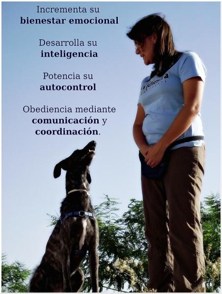Incrementa su bienestar emocional, desarrolla su inteligencia, potencia su autocontrol y obtén obediencia a través de una buena comunicación y coordinación.