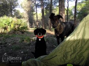 """Hugh y Bruma, dos urbanitas con muchas acampadas y rutas """"a sus lomos"""" ;)"""