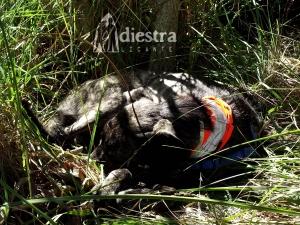 Bruma es capaz de descansar en casi cualquier parte: cuando nosotros paramos, ella se echa automáticamente para reponer fuerzas. ¡Perra lista!