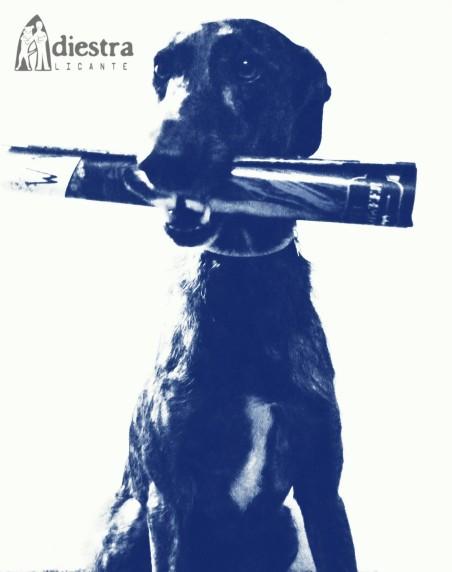 adiestralicante adiestramiento canino en alicante adiestrador perros noticias