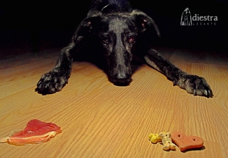 adiestralicante adiestramiento canino a domicilio alicante premios galletas refuerzo positivo