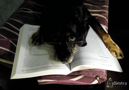 perro leyendo cognición adiestralicante adiestramiento canino a domicilio alicante adiestrador