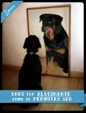 adiestramiento canino alicante adiestrador perros a domicilio