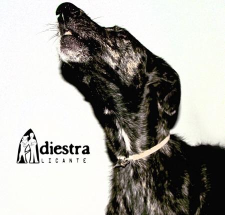 Adiestramiento canino alicante galgo ladrando adiestrador perros