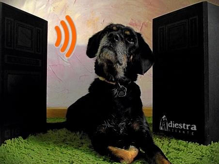 Adiestramiento canino Alicante Adiestrador los perros nos entienden