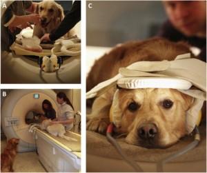 adiestramiento canino a domicilio adiestrador perros resonancia magnética